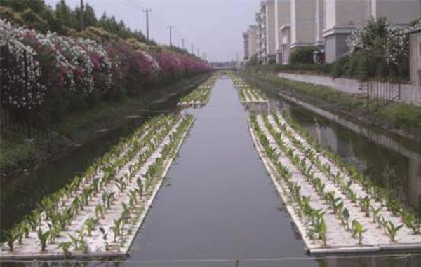 治理方法五:种植水上生态浮岛
