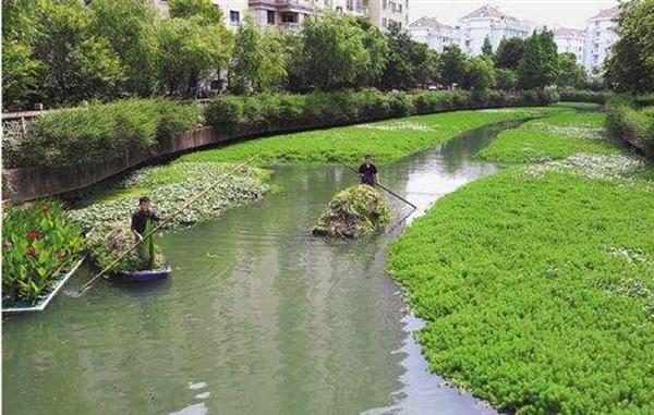 治理方法一:种植水上植物