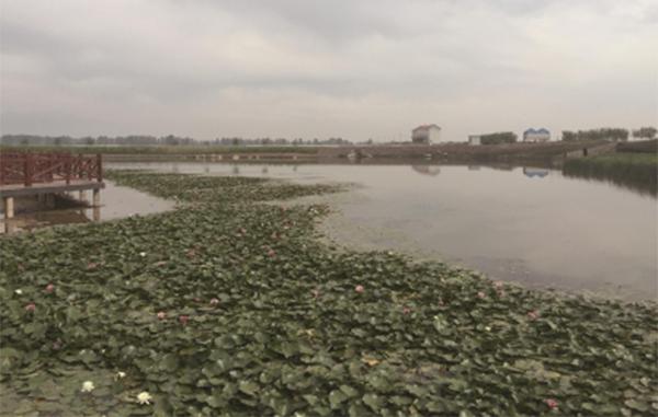湖泊富营养化防控及水生植物种植保护
