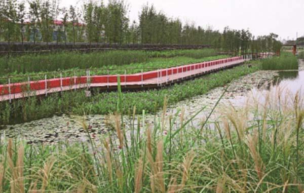 湿地公园生态景观修复